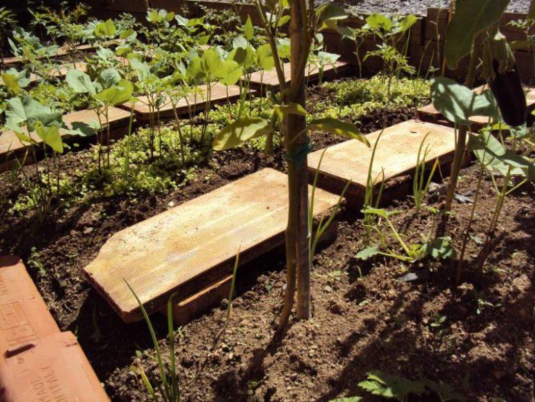 concime biologico orto