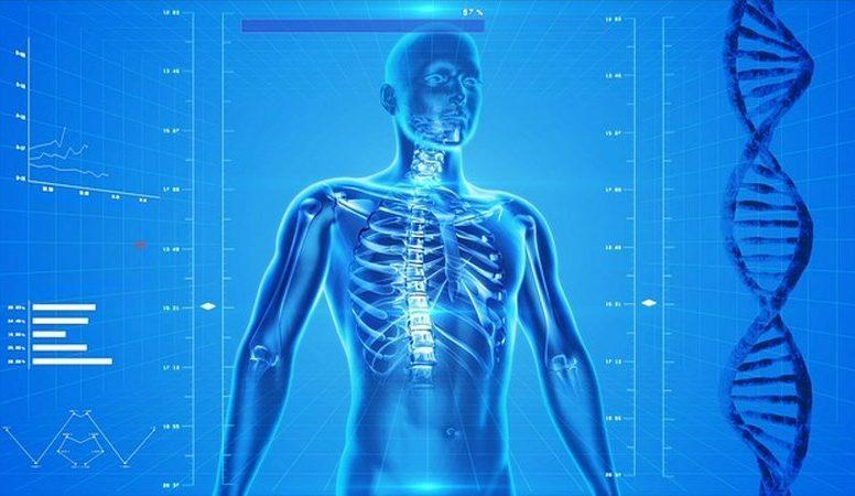 human-skeleton-163715_640_800x450